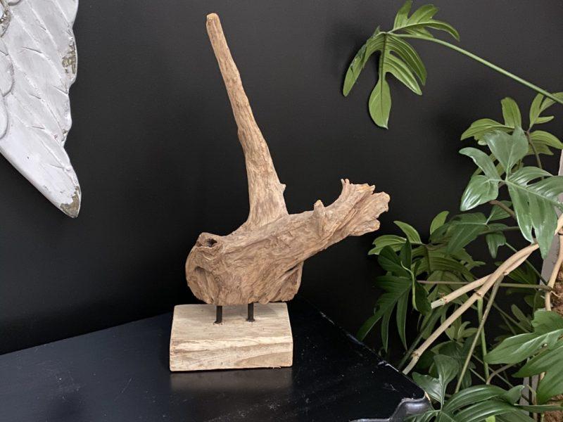 Racine en teck sculptée par le temps 01 Image