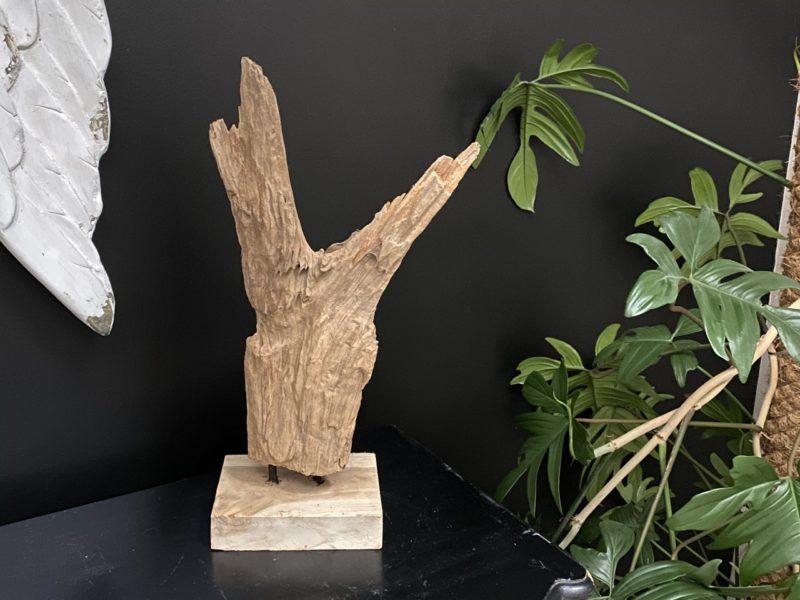 Racine en teck sculptée par le temps 04 Image