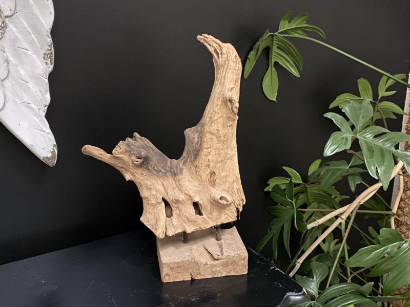 Racine en teck sculptée par le temps 02 Image
